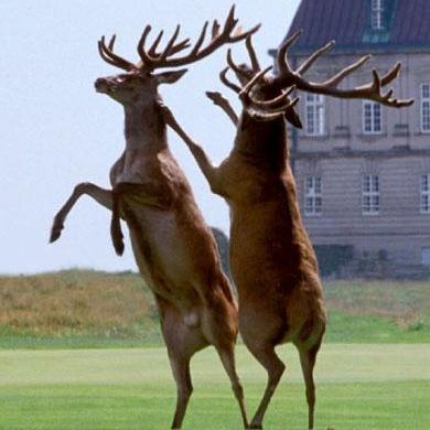 Kobenhavn Golf2